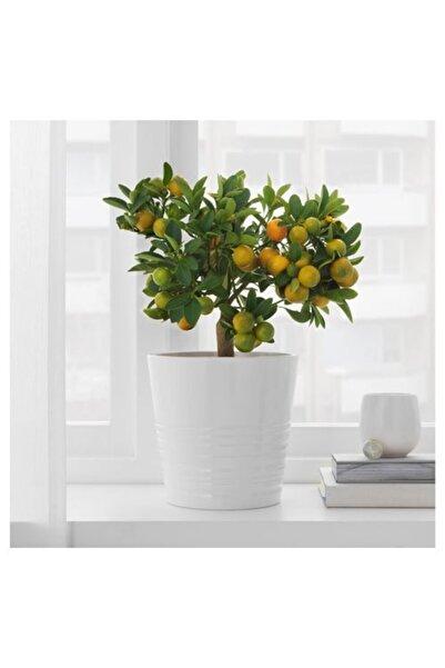 IKEA Muskot 15 cm Saksı Toprak Kap Seramik Beyaz Bahçe Çiçek