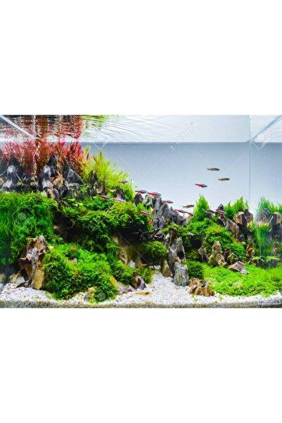 WOOF Co2 Gerekmeyen Kolay 30 Dal Akvaryum Bitki Paketi - Yeni Başlayanlar Için Uygun