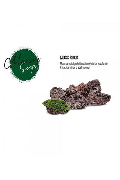 Marimo Scape Moss Rock
