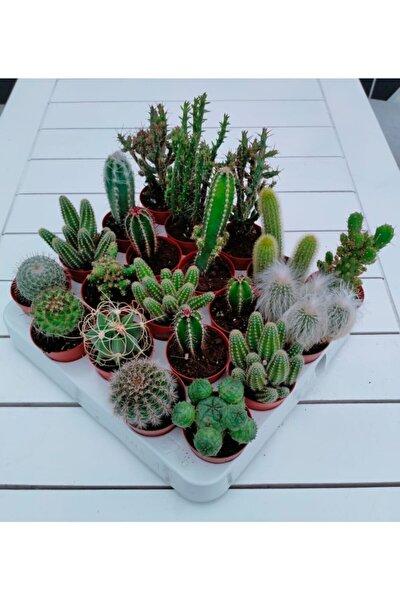 My Succulent 5'li ( 4+1 ) Adet Farklı Cins Kaktüs Mix Yerli/ithal Karışık
