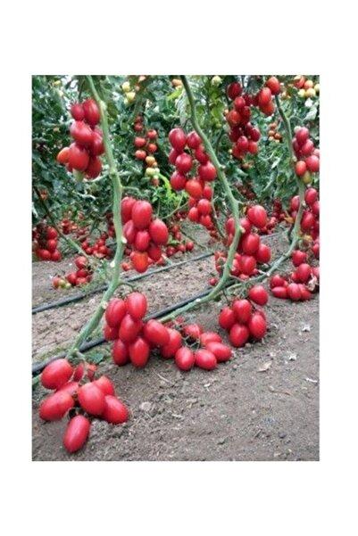 3M Zeytin Cherry Domates Tohumu Ortalama 25+ Tohum