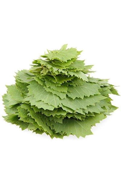 EvveBahce Tüplü Özel Ürün Yapraklık Sarmalık Dolmalık Üzüm (Asma-bağ) Fidanı