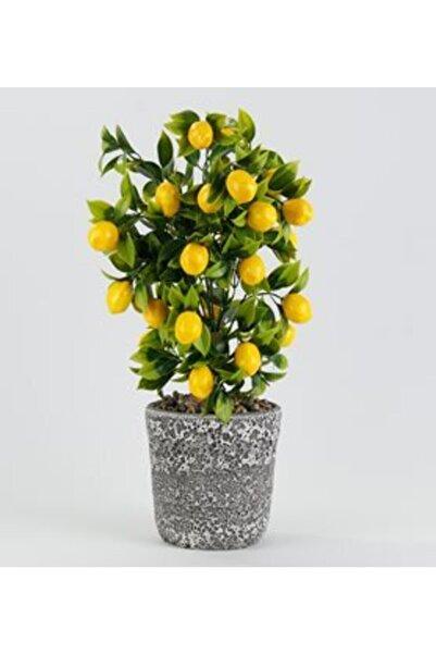ÇILGIN Limon Ağacı Yapay Saksılı , Masaüstü, Balkon, Raf Çiçeği Limon Demeti