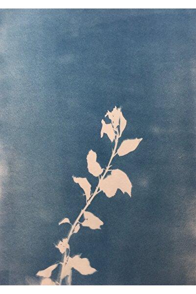 Büşra Öztürk Bağ Serisi, 47x40, Cyanotype