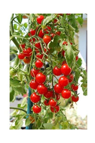 3M Agrobazar Delıcıous Salkım Cherry Domates Ortalama 25+ Tohum