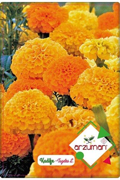 Arzuman Kadife Çiçeği Tohumu (50 Adet) Kokulu