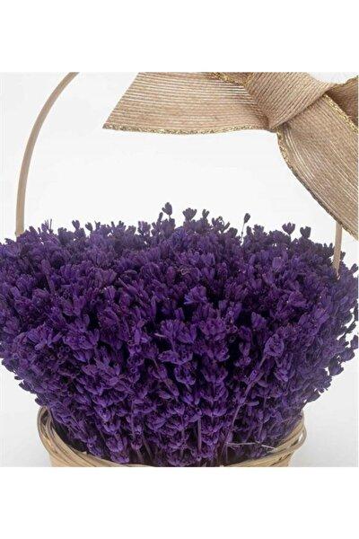 KAMONDO TOHUM 10 Adet Bodur Ingiliz Lavantası Kokulu Çiçek Tohumu