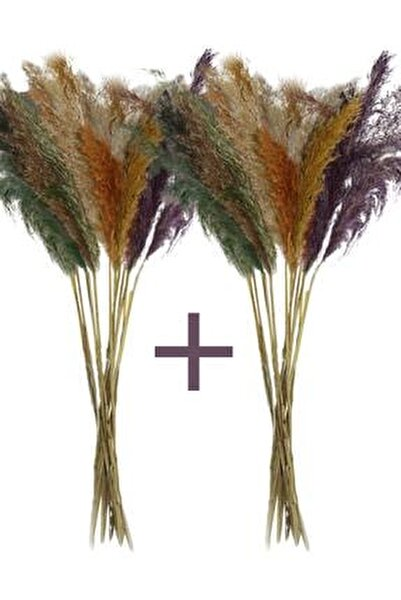 Pampas - Kuru Çiçek 30 Adet 100 Cm Karışık Renkli
