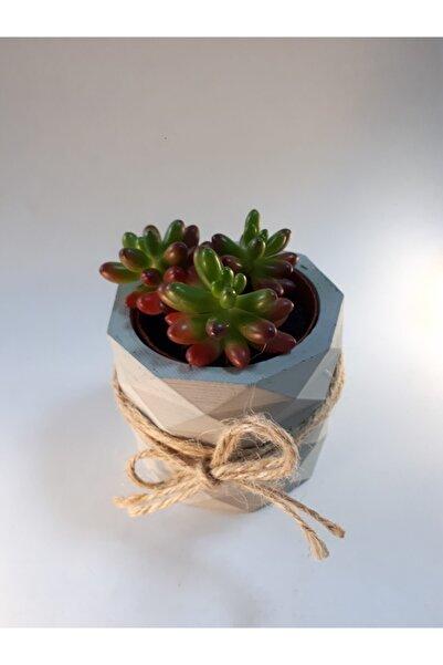 My Succulent Sedum Rubrotinctum Skulent Bitkisi