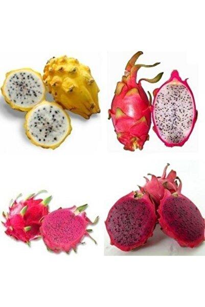 Reyon Bahçe 3 Lü Pitaya Dragon Fruit Fidanı Seti (beyaz Kırmızı Sarı)