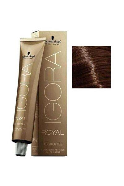 Igora Royal Absolutes 6-60 Koyu Kumral Çikolata Doğal Saç Boyası