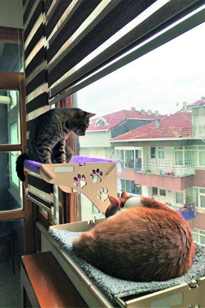 ATA HOME Cama Asılan Kedi Yatağı Vantuzlu