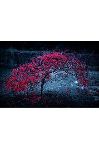 Shop365 Kırmızı Ağaç Kanvas Tablo 90 X 60 cm