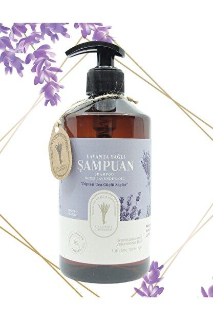 Gallipoli Lavender Lavanta Yağlı Şampuan 500 Ml Saç Dökülmeleri Ve Saç Kırılmalarına Karşı Etkili Lavanta Şampuan