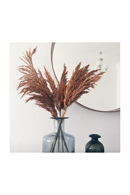 Kuru Çiçek Deposu Gerçek Kuru Çiçek Dökülmeyen Büyük Kiremit Rengi Pampas Demeti (100 cm 7 Adet)