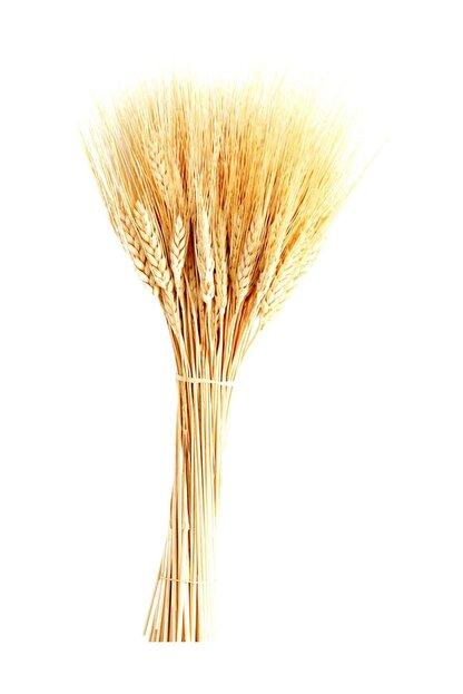 TahtakaleToptancıları Kuru Çiçek Doğal Başak Buğday Başağı 45 Cm (1 Demet) Natural
