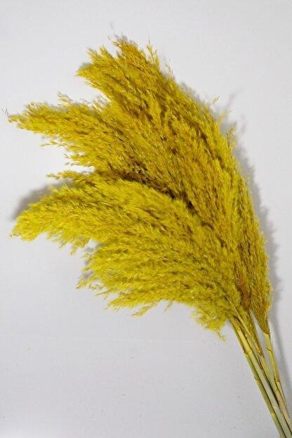 Mimozaçiçek Sarı Renk Pampas 7 Adet 120 Cm