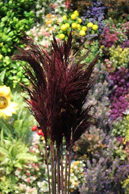 çiçek pazarı Şoklanmış Pampas