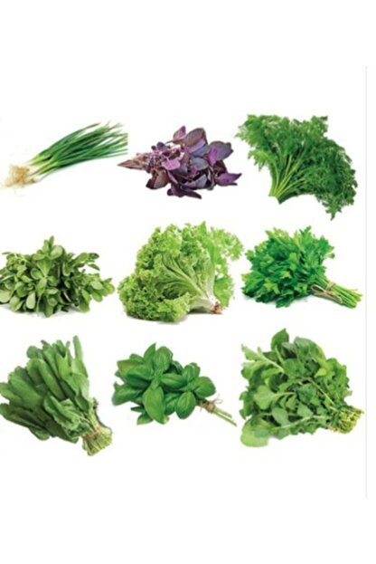 3M 1000 Adet Muhteşem Yeşillik Tohumu Paketi-10 Farklı Çeşit