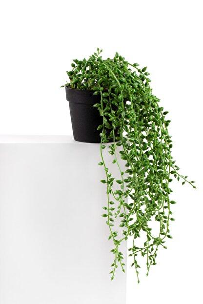 çiçekmisin Mini Siyah Plastik Saksıda Sarkan Boncuk Yeşillik