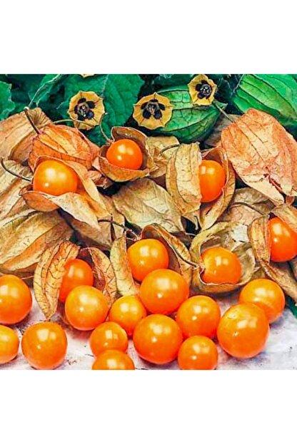 mutbirlik Şifalı Altın Çilek Yer Kirazı Meyvesi Fidesi-5 Adet