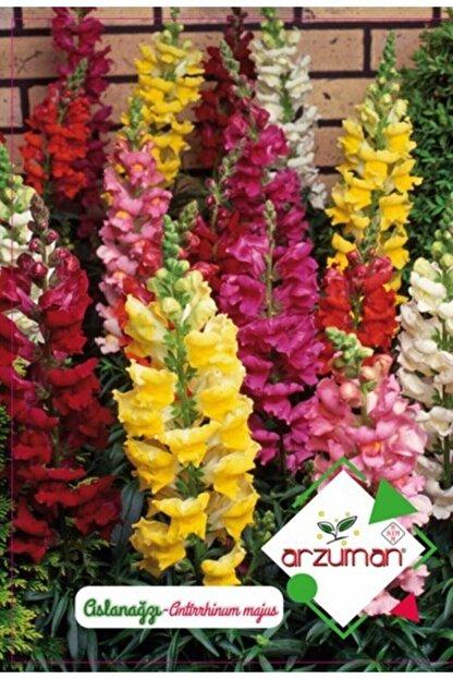 Arzuman Süs Bitki Aslan Ağzı Çiçek Tohumu
