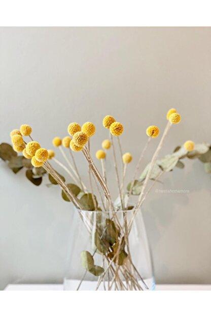 Hestia Home Kuru Bitki Graspedia