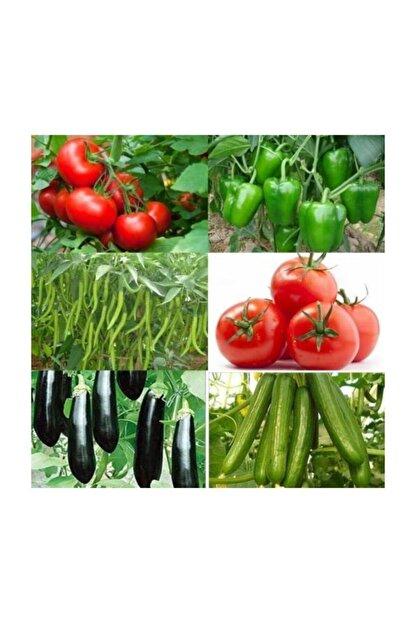 Universal Tam 500 Adet Sertifikalı Domates -salkım Domates-biber-salatalık-patlıcan-dolma Biber Tohumu + Gübre