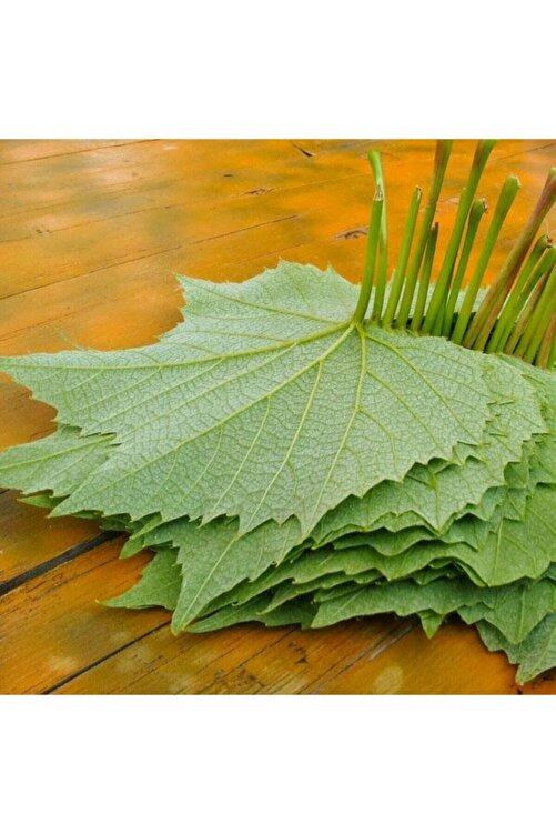 ADA TARIM Tüplü Yapraklık Sarmalık Dolmalık Üzüm Asma-bağ Fidanı 1
