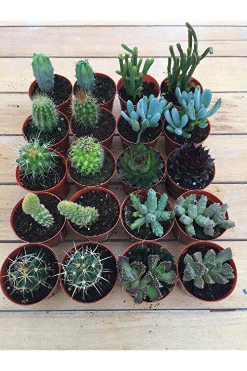 My Succulent Sukulent Ve Kaktüs 20 Adet Hediyelik Bitki Duble Mix 2'li Karışık Set, Cactus,succulent,skulent 2