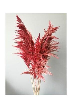Kuru Çiçek Deposu Gerçek Kuru Çiçek Dökülmeyen Büyük Kırmızı Pampas Demeti 100 Cm 7 Adet 1