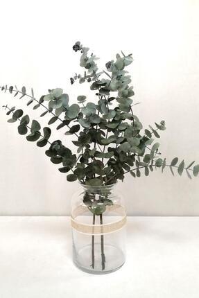 Kuru Çiçek Deposu Şoklanmis Küçük Yeşil Okaliptus Demeti 0