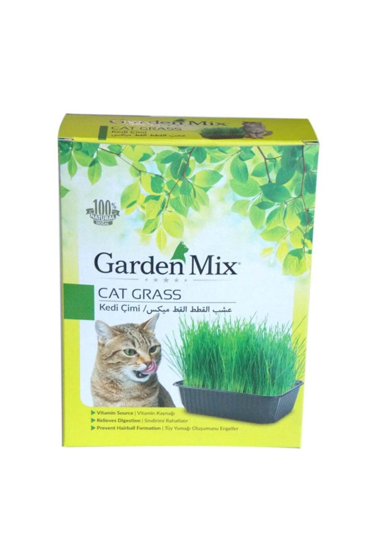 Cat Grass Kedi Çimi