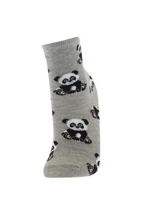 Defacto Erkek Çocuk Kutulu Pug Desenli 6'lı Soket Çorap 3