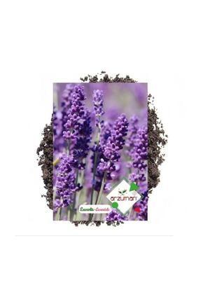 Arzuman Tohum Lavanta Çiçeği Tohumu 100 Adet 0