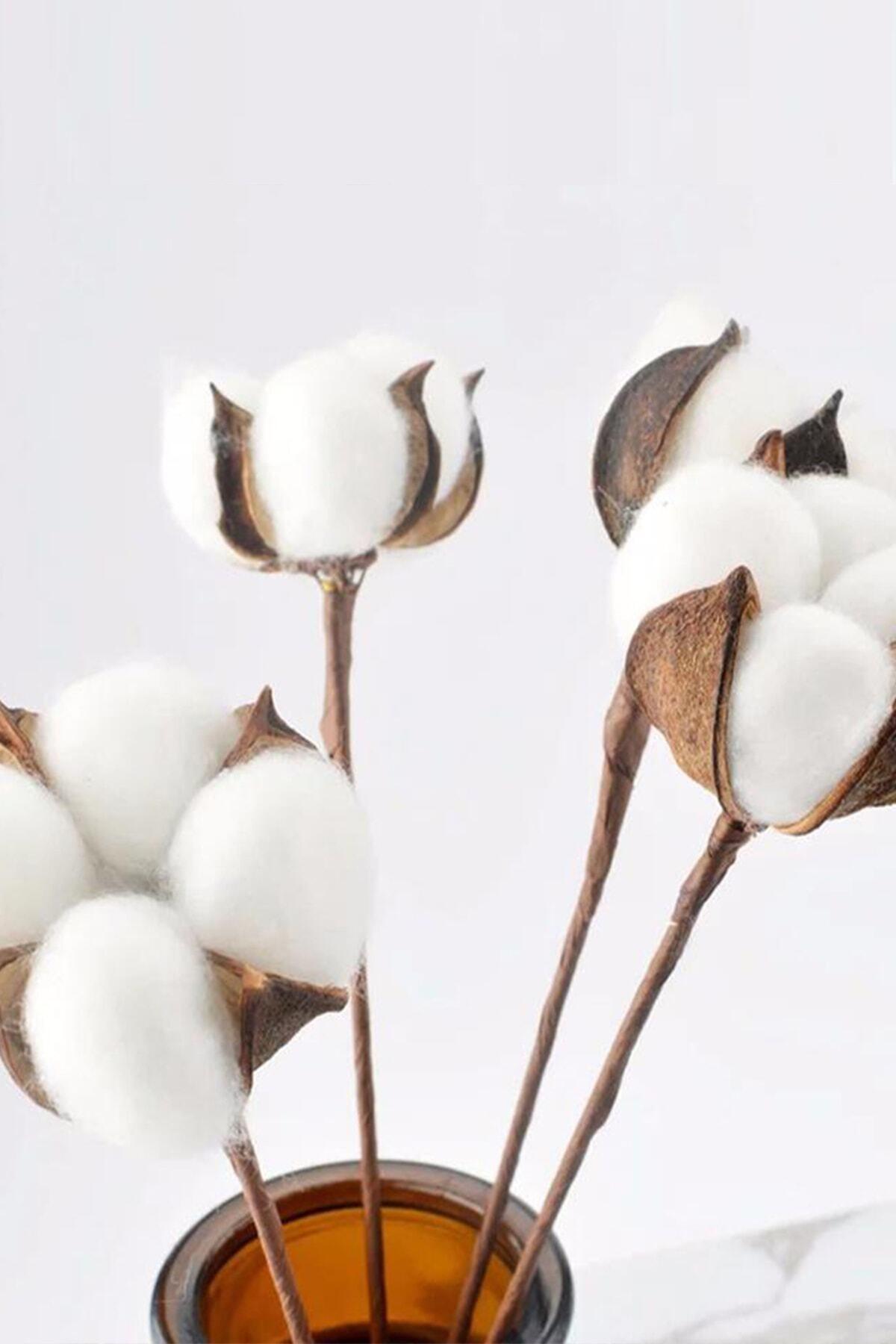Beyaz Doğal Pamuk Dalları 6 Adet