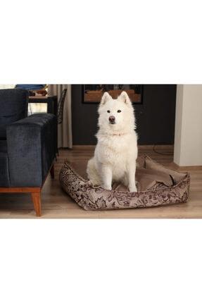 Köpek kedi ve köpek yatağı