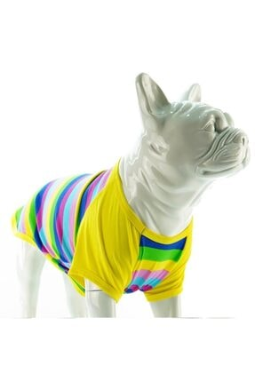 Shokopet - T-shirt - Color Box - Color Box - Lindodogs
