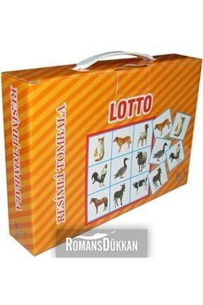 Lotto GKMN415