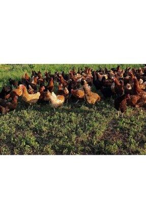 AdaBahçe Tarım Organik Gezen Tavuk Yumurtası 2