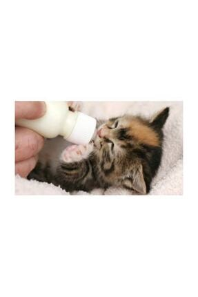 Maxisol Anne Sütü Destekli Yavru Kedi Süt Tozu 200 Gr 2