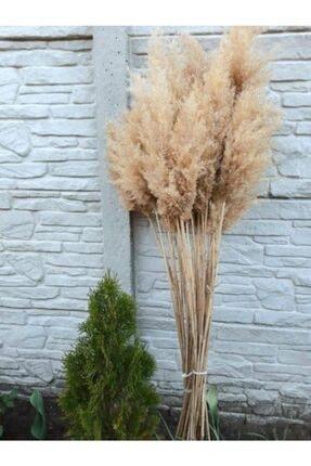 AYS Kuru Çiçek  20 Adet Şoklanmış Pampas 2