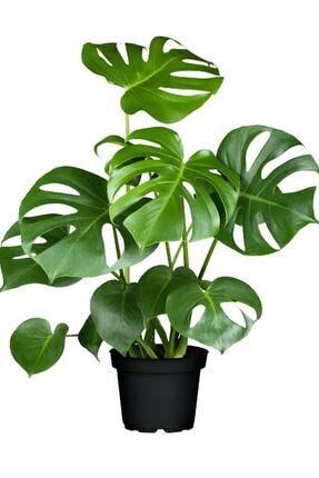 İç Mekan Bitkileri