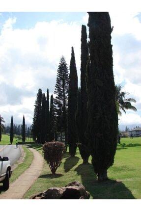 Dış Mekan Ağaçları