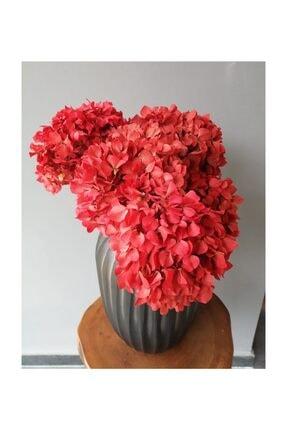 Kuru Çiçek Deposu Solmayan Gerçek Ortanca Buketi Kırmızı 4-5 Adet , Kuru Çiçek 1