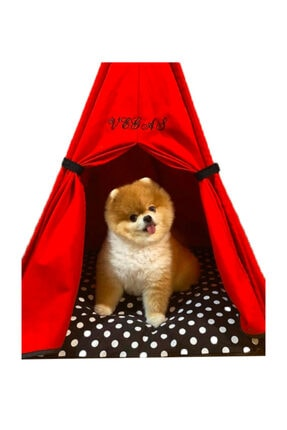 Teepee House Yataklı Köpek Çadırı (70-70 cm) 1