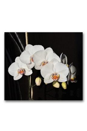 Decorita Orkideli Mutfak | Ocak Arkası Koruyucu | 49.5cm x 76cm 1