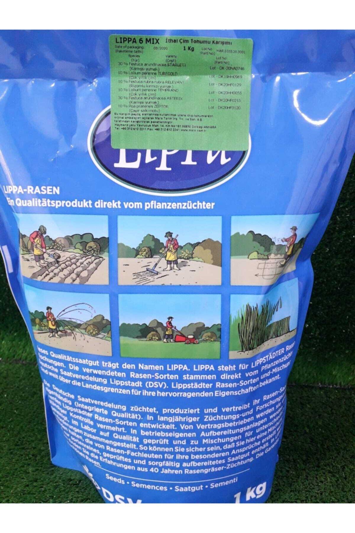 Ekodoğa Çim Tohumu 2 Kg 6 Karışım Çim Tohumu Dayanıklı 1. Kalite Çim Tohumu Yer Örtücü Karışım Çim Lolium