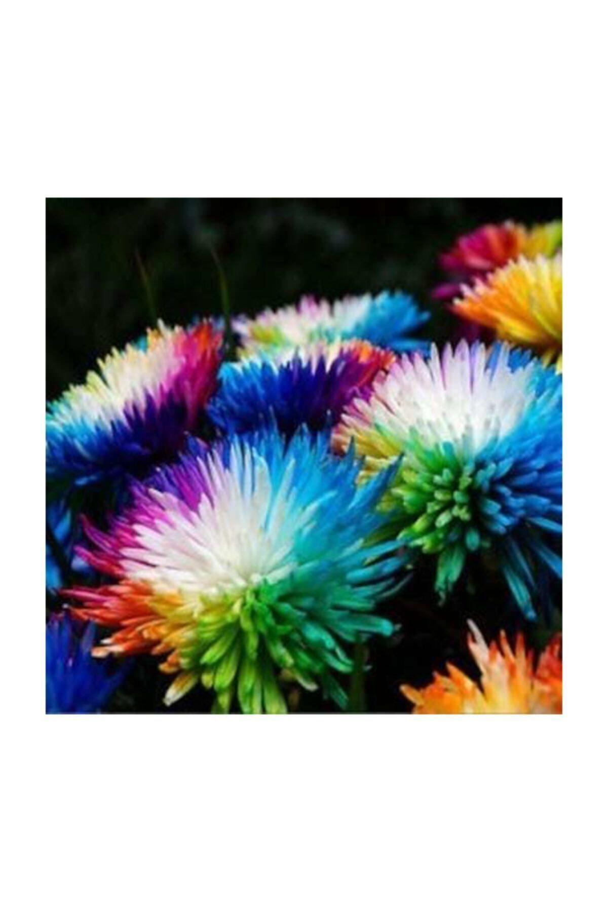 Renkli Himalaya Orkide Tohumu 5 Adet Tohum