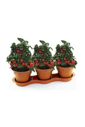 Çam Tohumculuk Cherry Saksılık Domates Tohumu 10 Adet Tohum 1